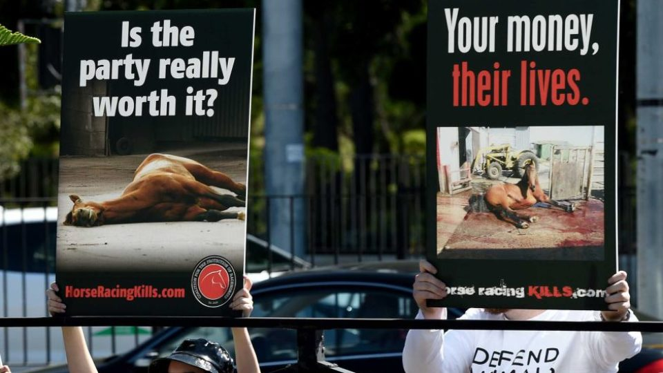 racehorse slaughter