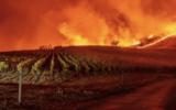 california-bushfires