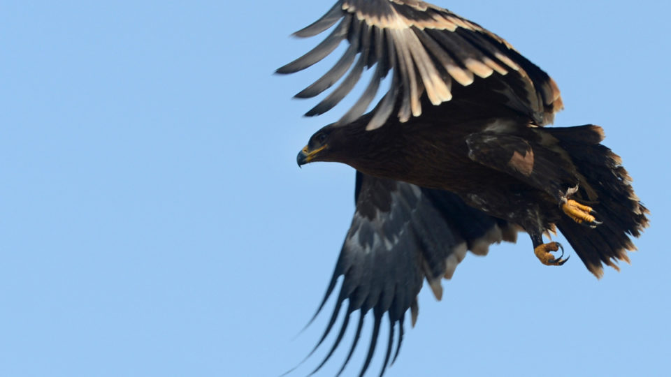 russian-research-eagles