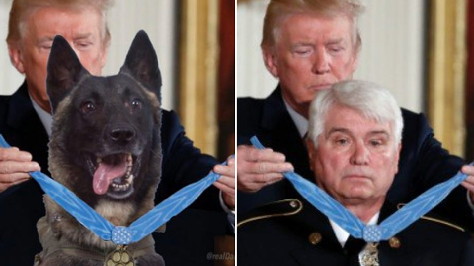 donald trump dog photo