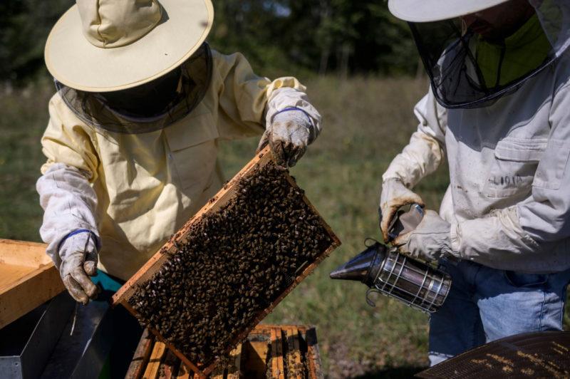 honey price