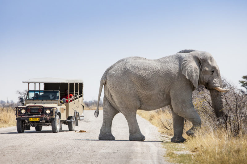 elephants-namibia