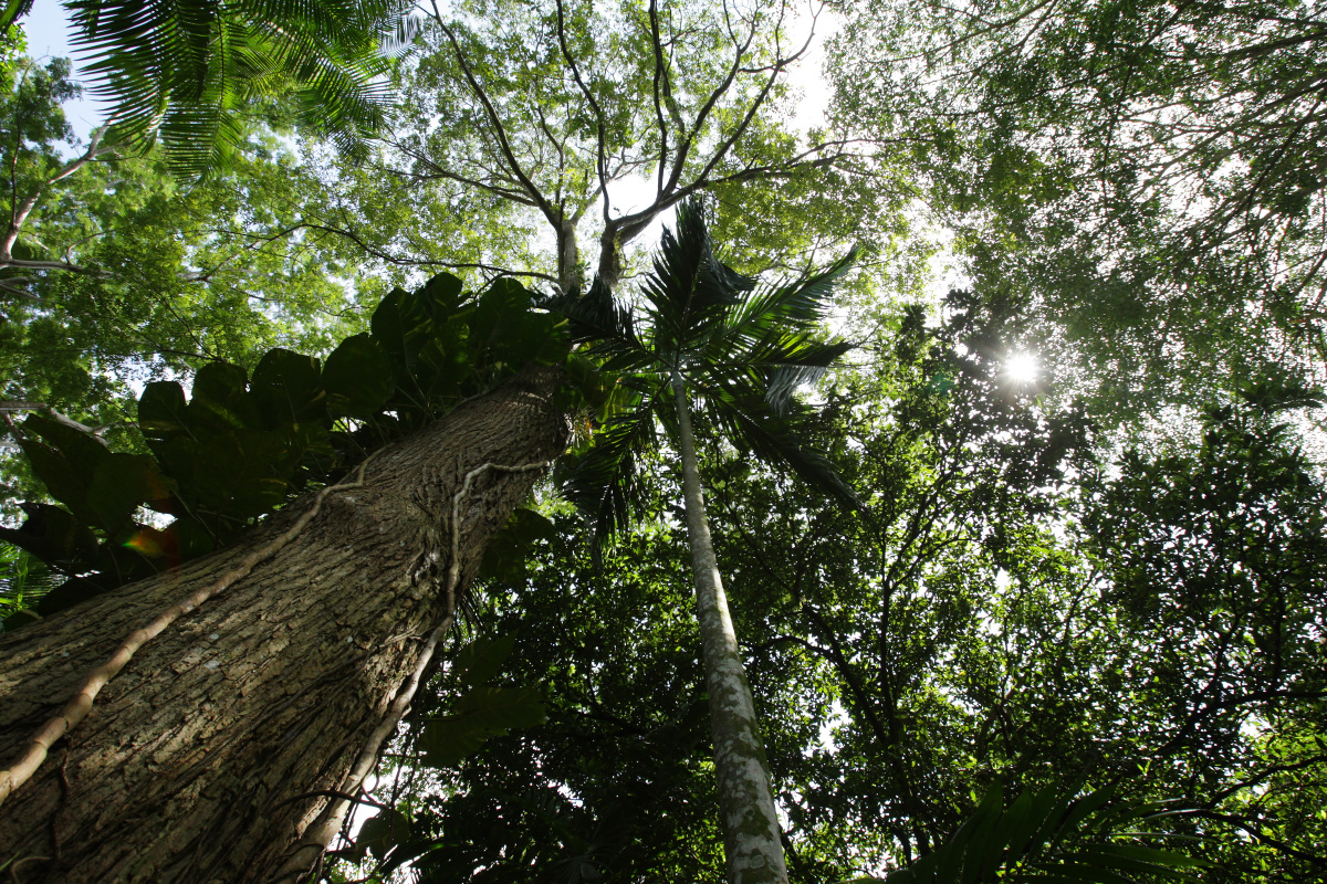 Slain Amazon eco warrior becomes a conservation martyr_2