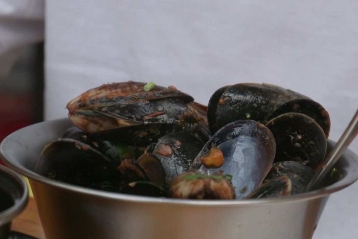 After being dredged to nearly nothing, Australia's lost shellfish reefs are roaring back to life_1