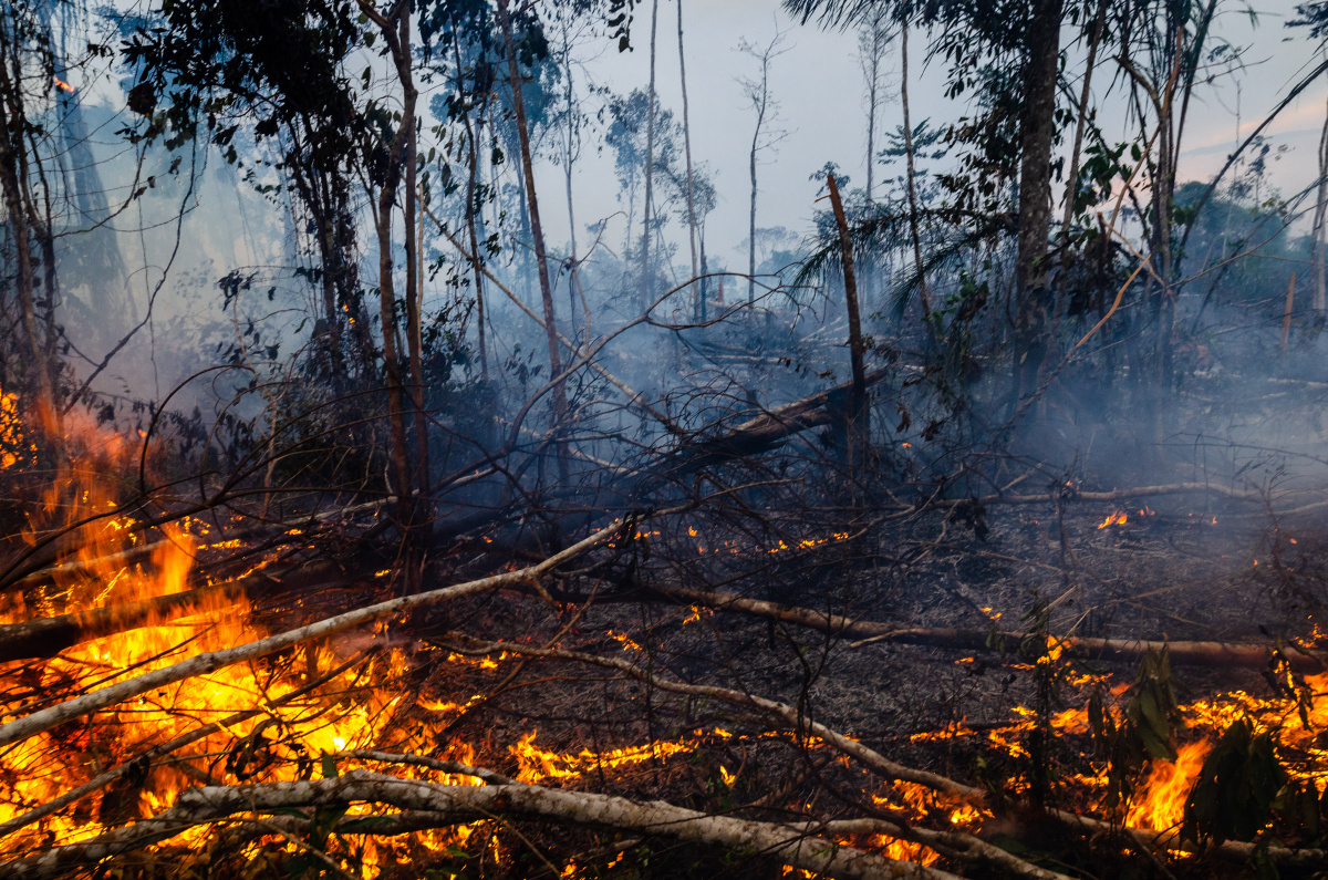 Slain Amazon eco warrior becomes a conservation martyr_3