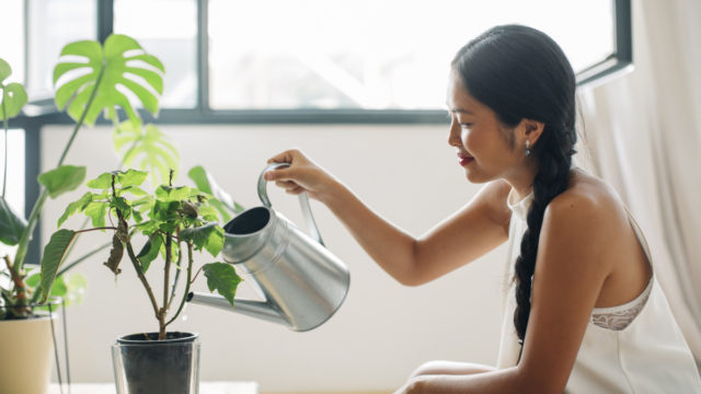 House plants might look nice, but they're not as super as you think