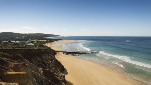 The gentle waves at Anglesea beach are a draw for beginner surfers.