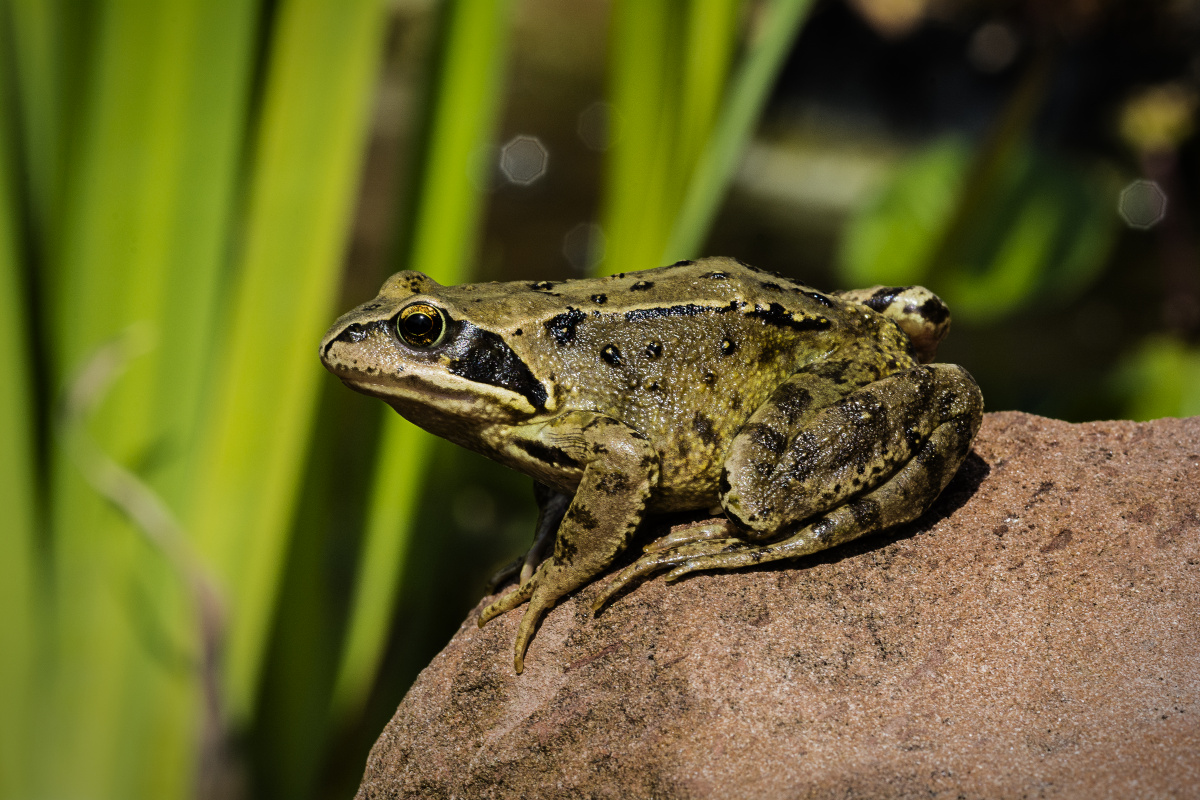 Phobias Of Frogs And Outdoor Spaces Among Many Things Sparking Anxiety