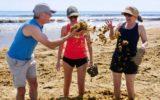 gold coast beach seaweed