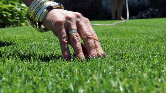 Keep your garden alive in summer through fire, drought, extreme heat