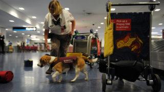 swine fever airport checks