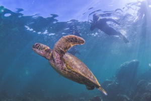 Australia's best beaches coral bay