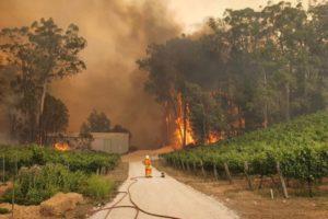 adelaide hills scammers bushfires