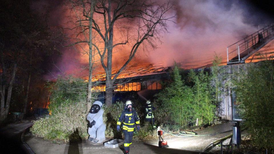 german zoo fire lanterns