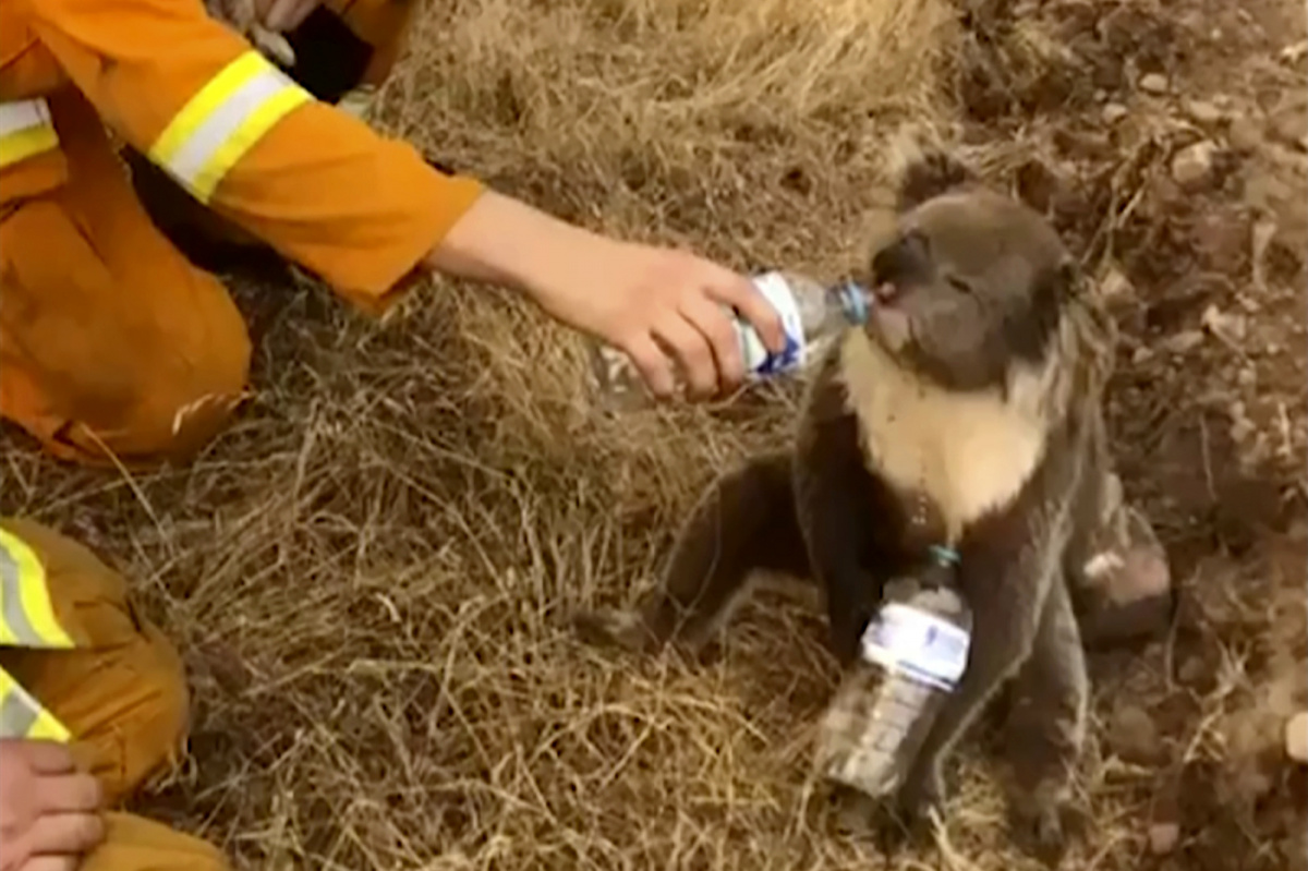 Family bypasses bushfire roadblocks to save thousands of beehives as wildlife death toll rises_7