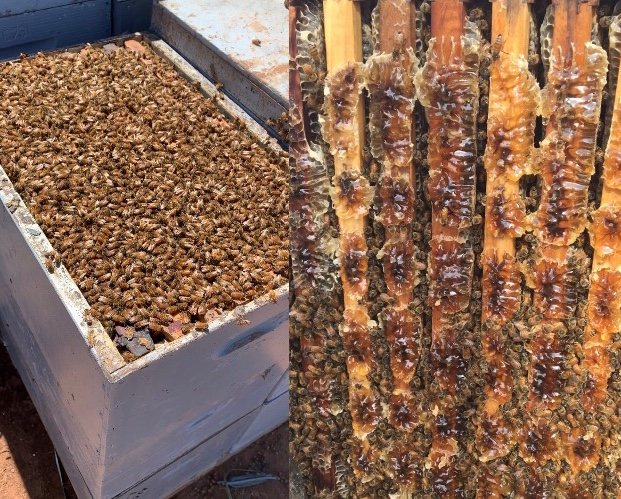 Family bypasses bushfire roadblocks to save thousands of beehives as wildlife death toll rises_1
