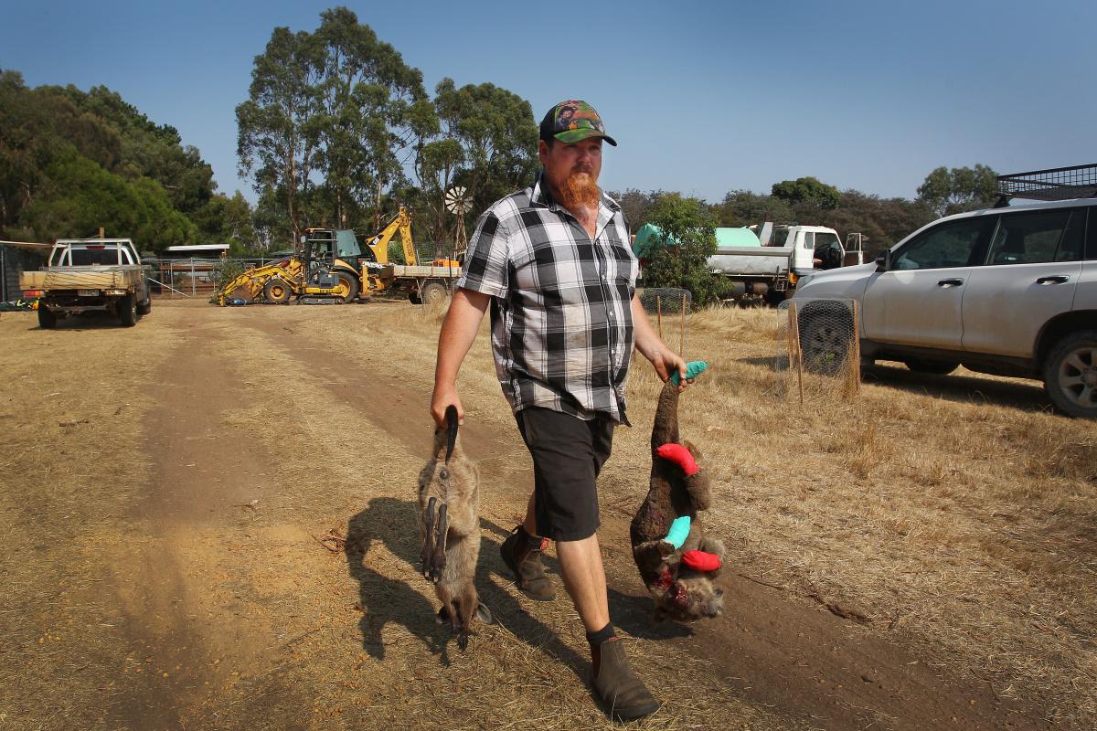 'A monstrous event': Bushfires have killed1.25 billion animals_1