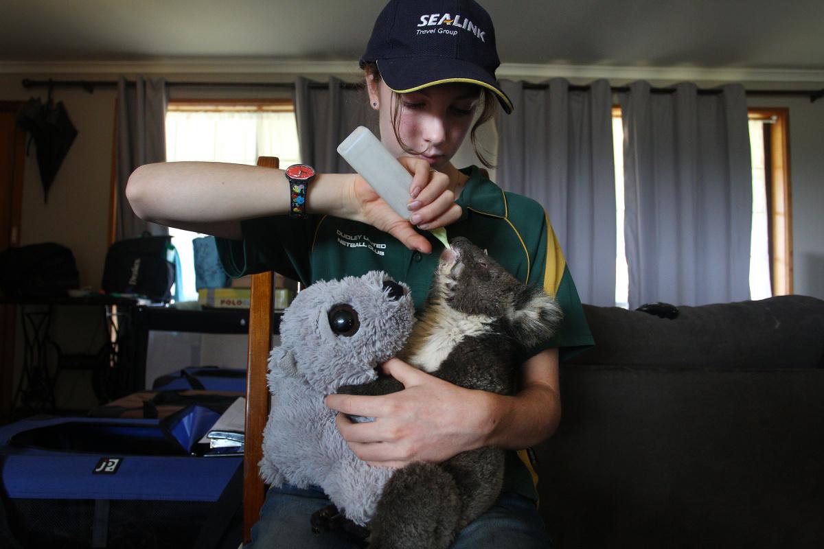 'A monstrous event': Bushfires have killed1.25 billion animals_2