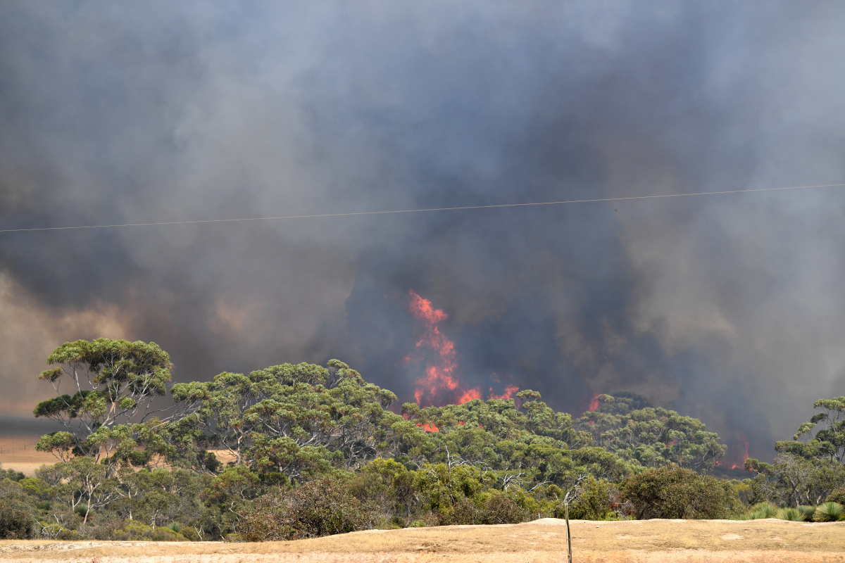 Victoria extends state of emergency as Kangaroo Island flares up again_2