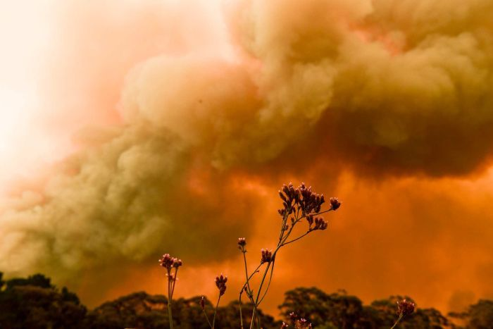 blue mountains bushfires