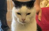 perdita worlds worst cat