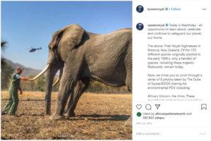 prince harry elephant press complaint