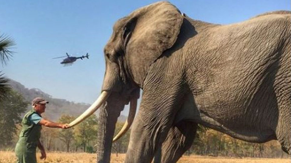 prince harry elephant complaint