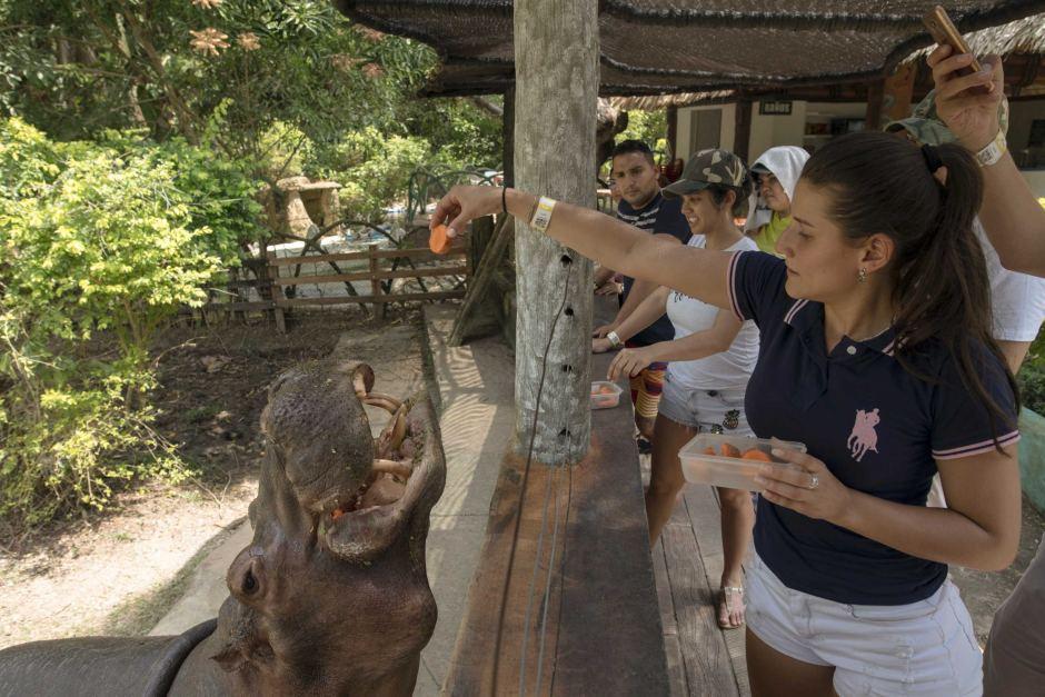 hippopotamus-colombia