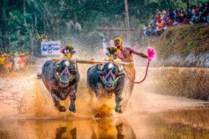 buffalo-running-man