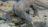 Komodo Island has the biggest remaining population of komodo dragons. Photo: Getty