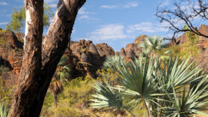 australia walking trails