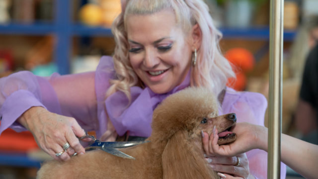 Forget the catfights, Pooch Perfect is a reality TV treat