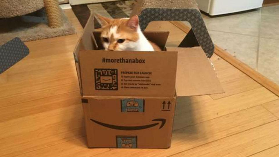 Obi the cat