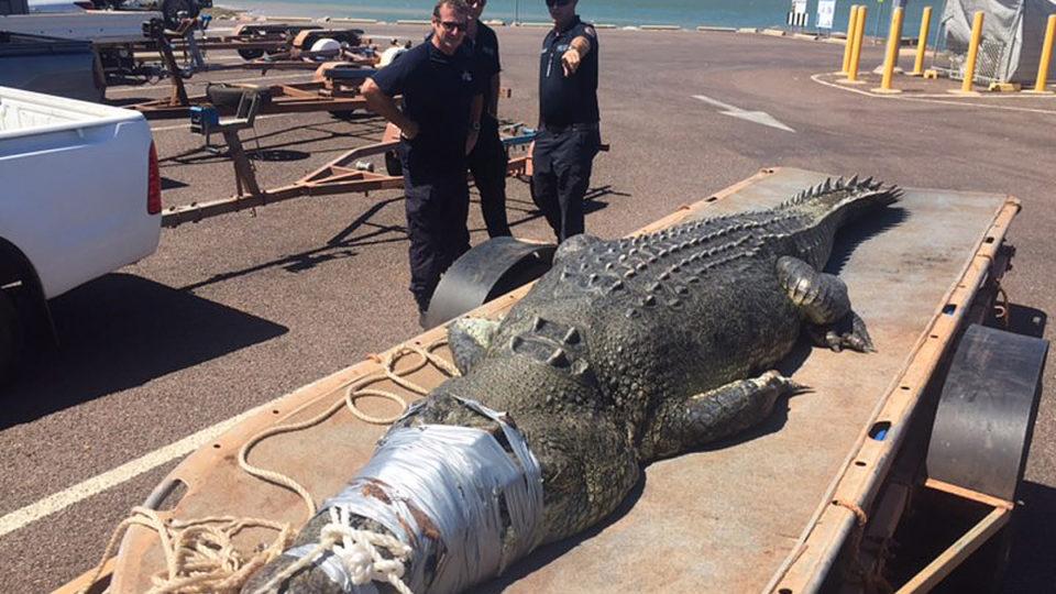 darwin crocodile attack