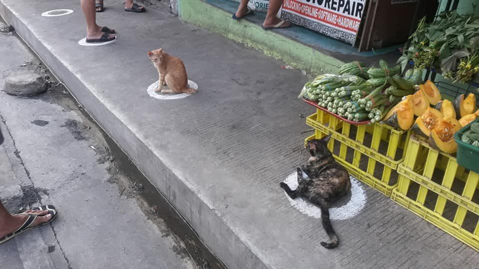 social distancing cats