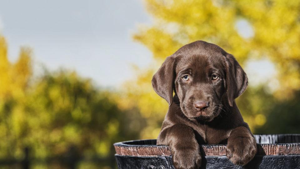 puppy scam coronavirus