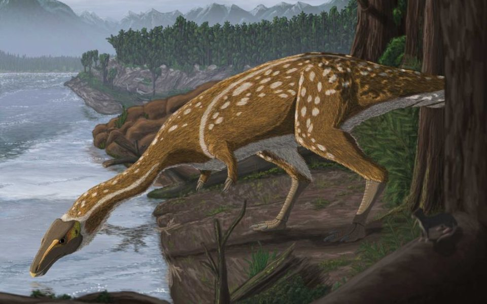 Fossilised bones of rare 'delicate' dinosaur elaphrosaur identified in a first in Australia – The New Daily