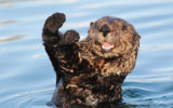 Otters are the best