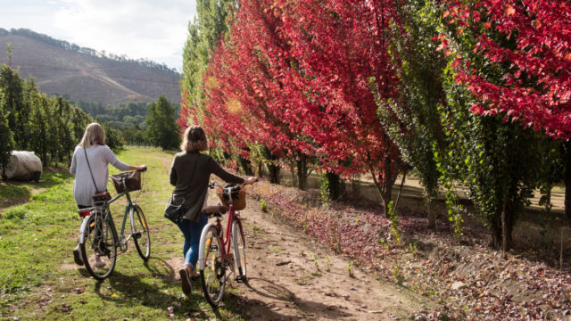 It could be Europe – but it's not. This is autumn in country Victoria.