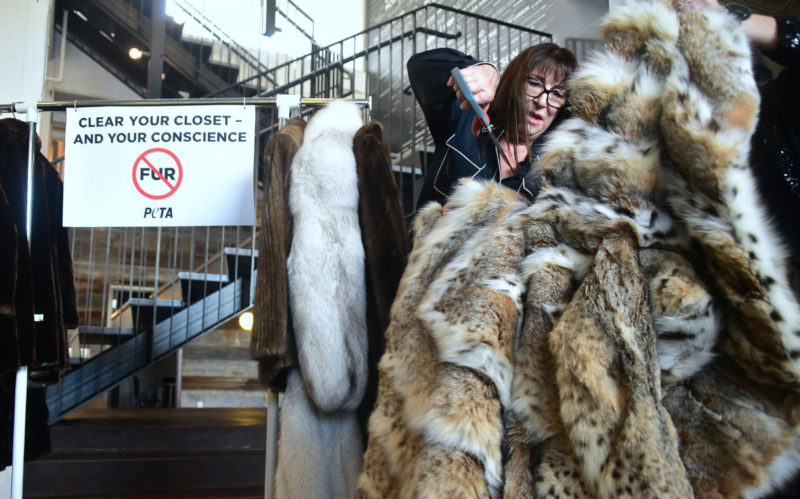 Actress Anjelica Huston cuts her Lynx fur coat which she donated to PETA (People Against the Ethical Treatment of Animals) in Los Angeles, California on January 30, 2018