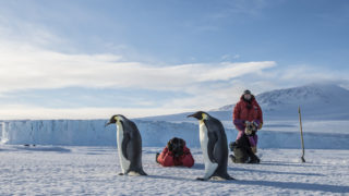 A group of people shoot photos emperor penguins in the Ross Sea near McMurdo Station, Antarctica