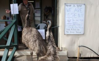 emus queensland