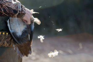 bird flu victoria