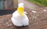 snow ballarat august 2020