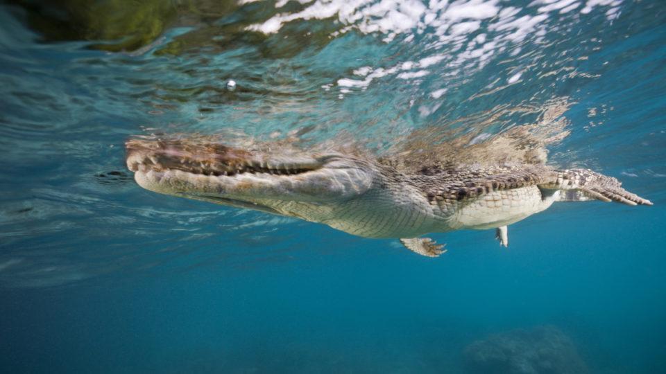 lizard island crocodile man