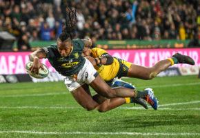 springboks 2020 rugby championships