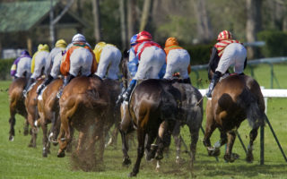 nsw racehorse slaughter