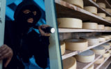 Cheese thieves