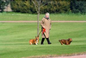 queen dog dies