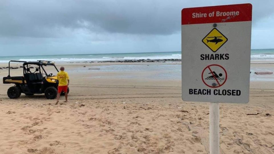 cable beach shark attack